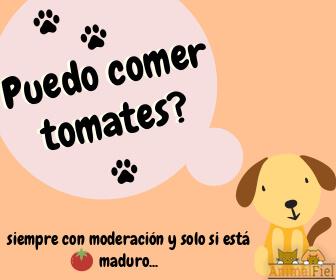 mensaje sobre perros y tomate