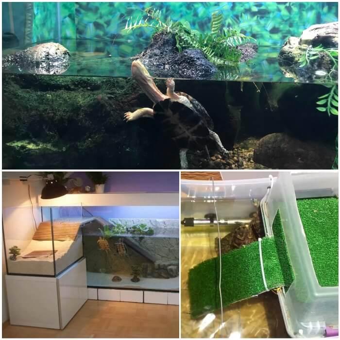 tortuga sacando la cabeza fuera del agua