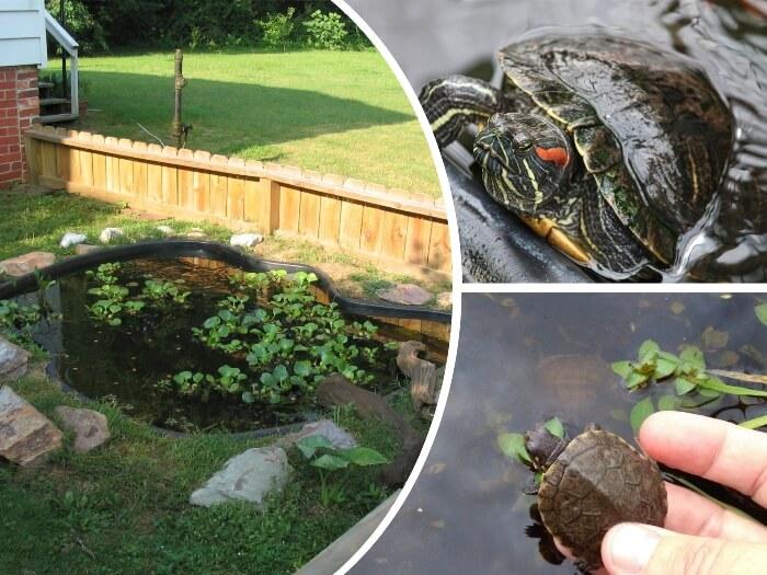 estanque para tortugas con plantas y rocas