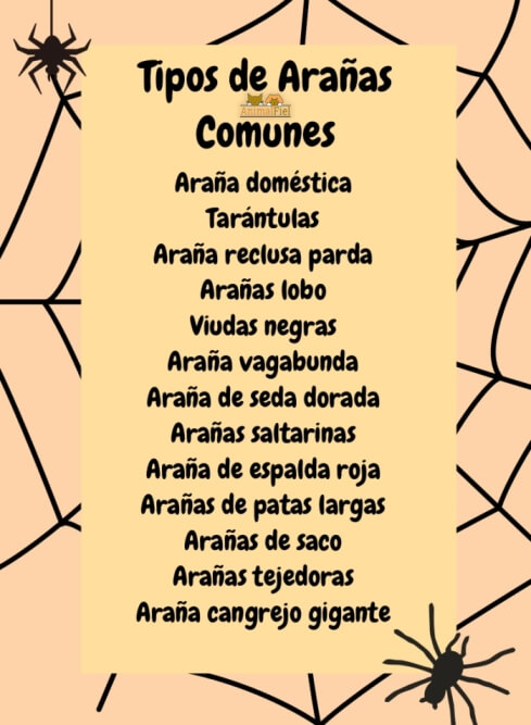 imagen diseño con tipos de arañas más comunes