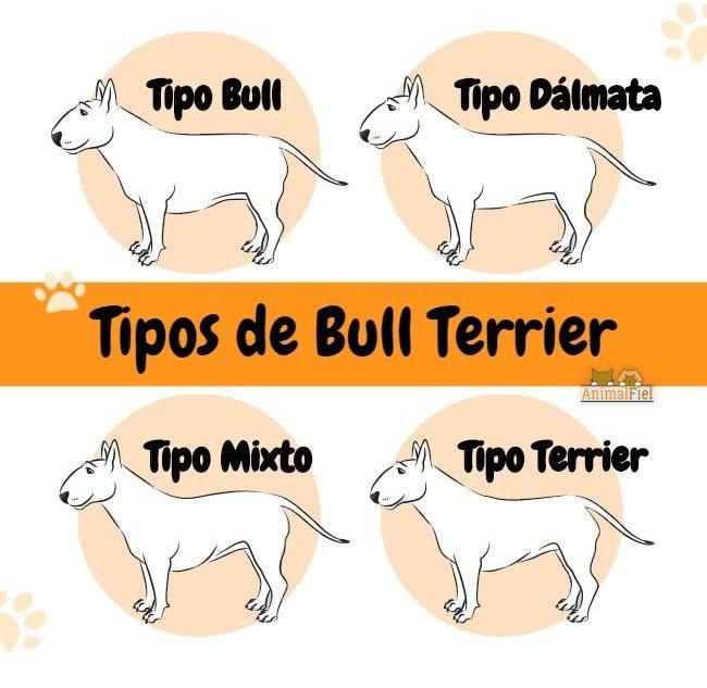 imagen diseño con 4 tipos de bull terrier