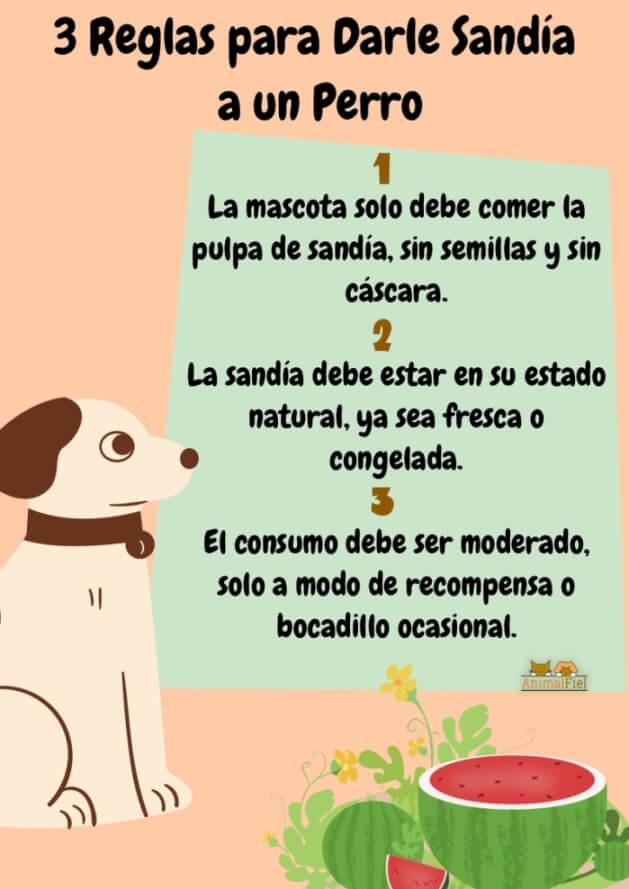 imagen resumen sobre los perros y el consumo de sandía