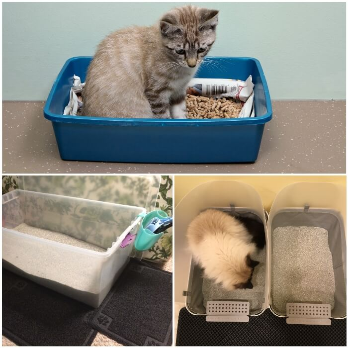 gato dentro de una caja de arena azul