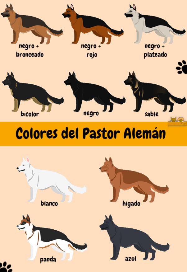 imagen diseño con los colores del pastor alemán