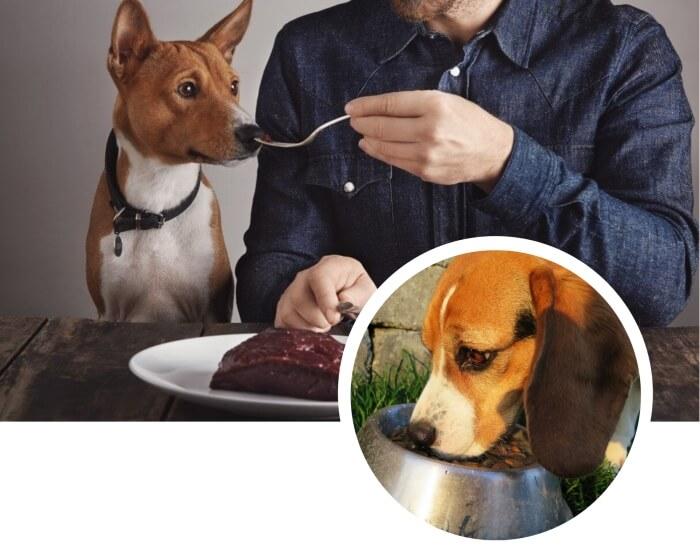 hombre dándole hígado a su perro