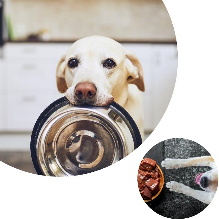 perro echado frente a un plato de hígado