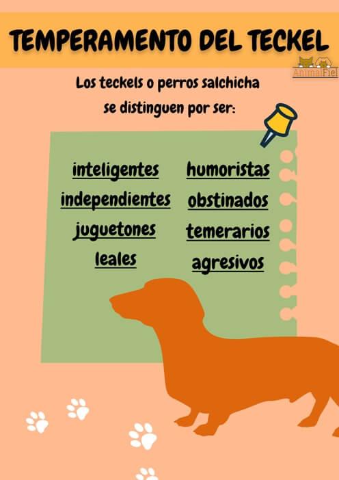 imagen diseño rasgos de la personalidad del dachshund