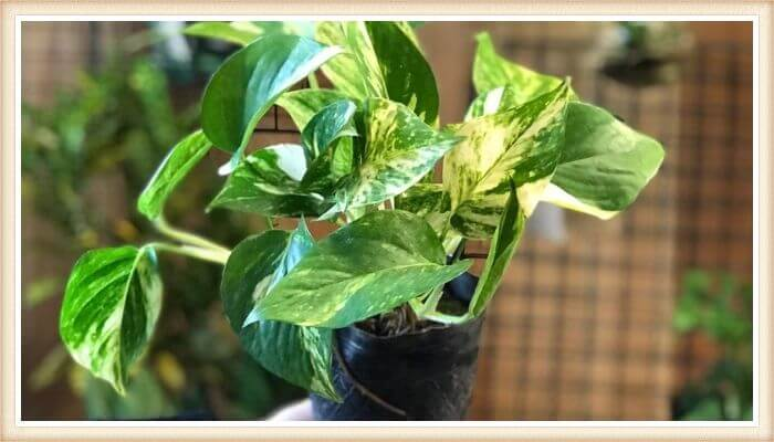 planta potus en el interior del hogar