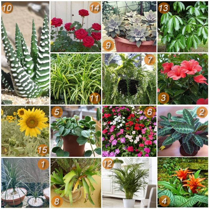 imagen collage de plantas no tóxicas para gatos