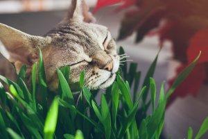 gato frotando su cara en una planta