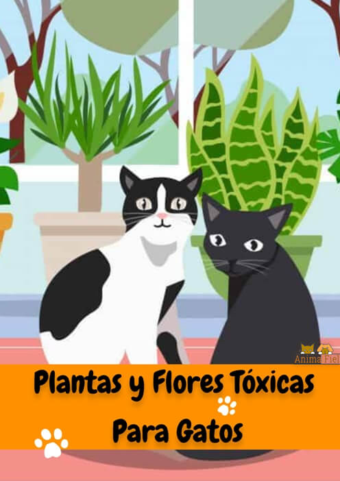imagen diseño plantas y flores tóxicas en gatos