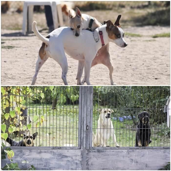 perros asomados detrás de una valla