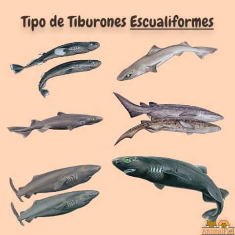 imagen diseño de tiburones escualiformes