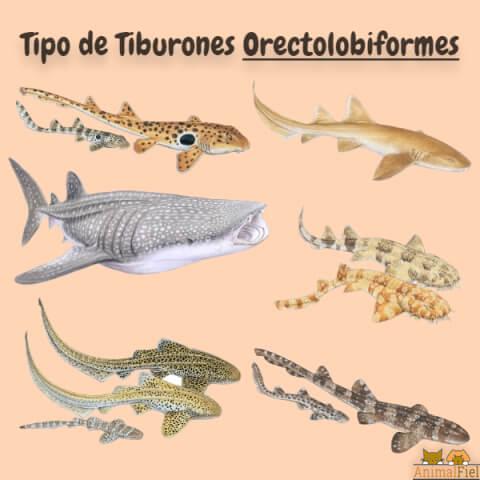 imagen diseño de tiburones orectolobiformes