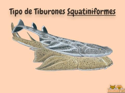 imagen diseño de tiburones squatiniformes