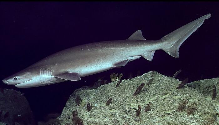tiburón de peinetas junto a una gran roca