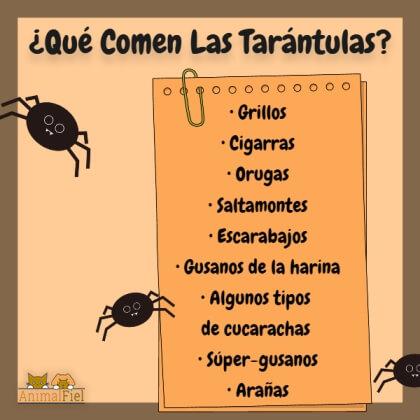 imagen-diseño sobre la dieta de las tarántulas mascota