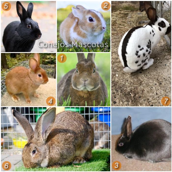imagen collage de otras razas de conejos