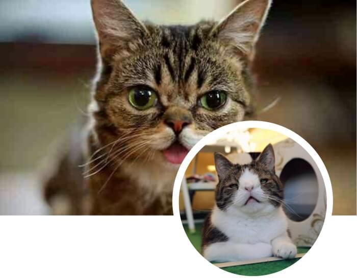 gato bicolor de aspecto inusual