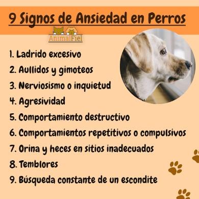 imagen-diseño sobre signos de ansiedad canina