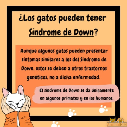 imagen-diseño sobre gatos con síndrome down