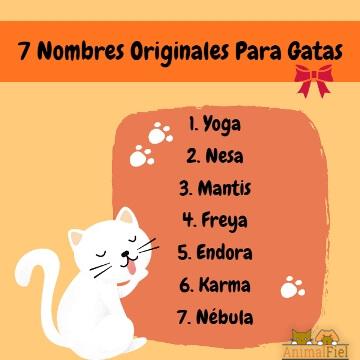 imagen-diseño nombres de gatas