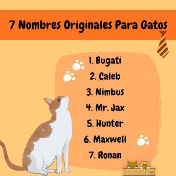 imagen-diseño sobre nombres para gatos