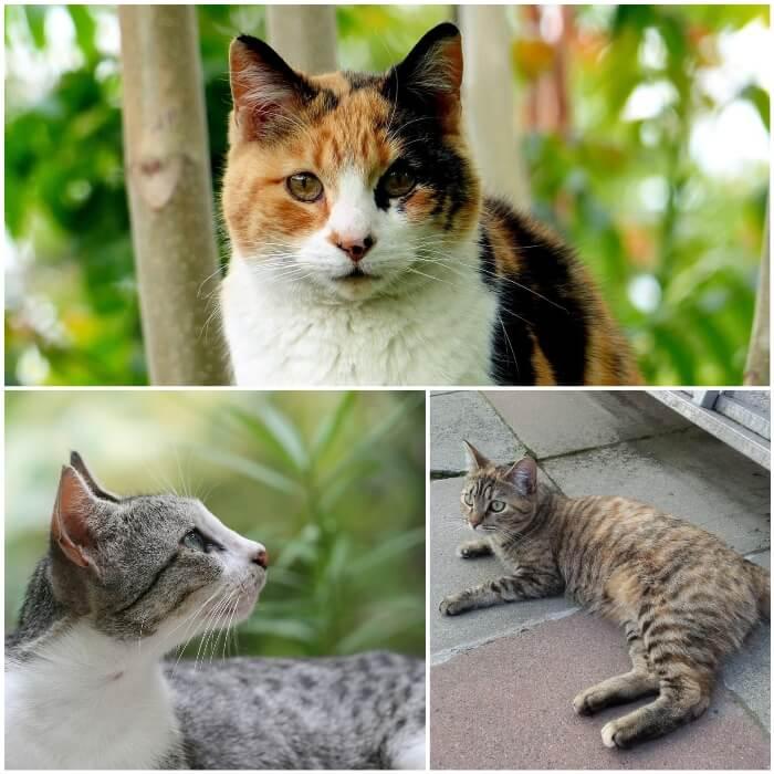 hermosa gata blanca, negra y naranja