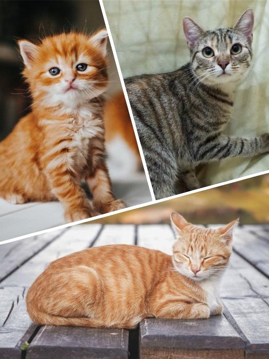 gato atigrado de color naranja con ojos cerrados