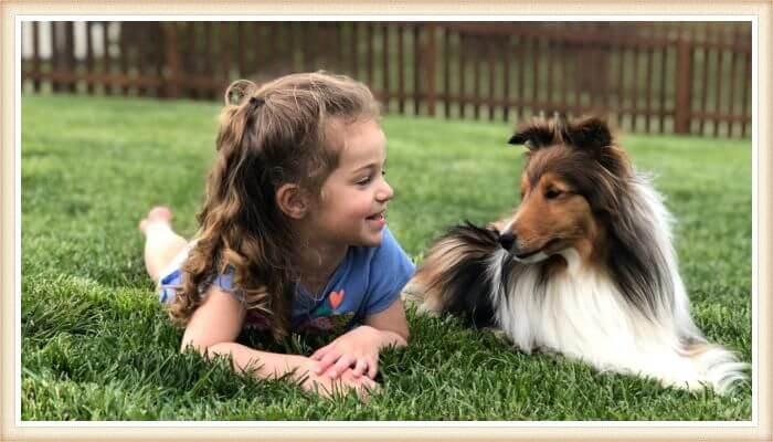 pastor de las islas de shetland acostado junto a una niña