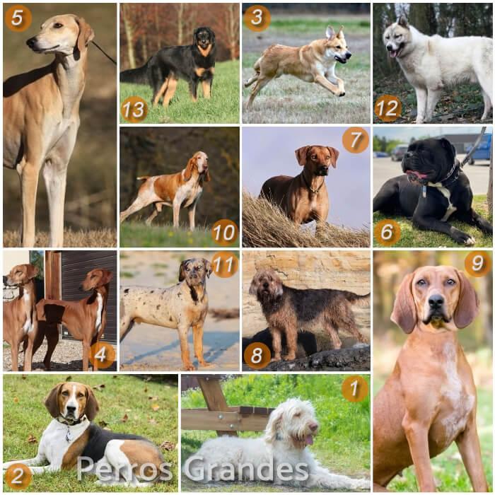 imagen collage de razas de perros grandes