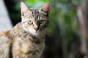 gato de ojos verdes mirando atentamente
