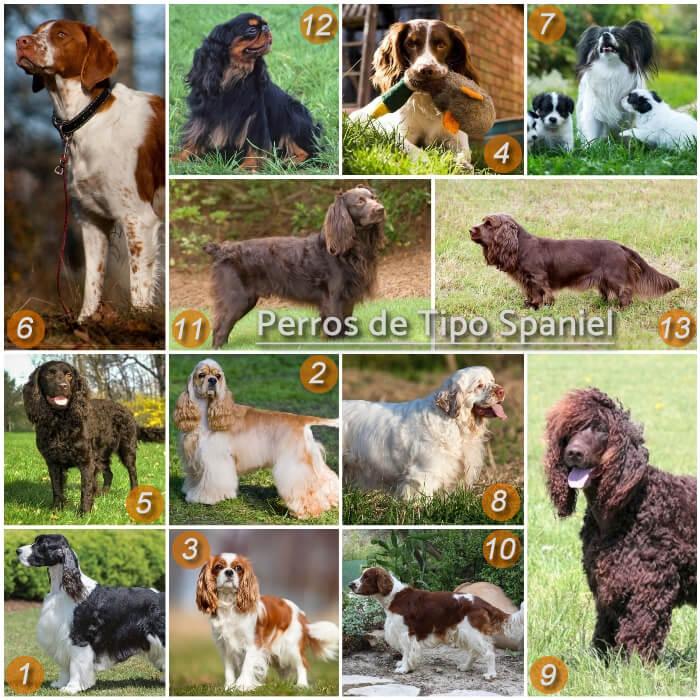 imagen collage con razas de perros spaniel