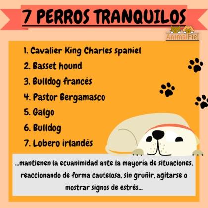 imagen-diseño sobre razas de perros tranquilos