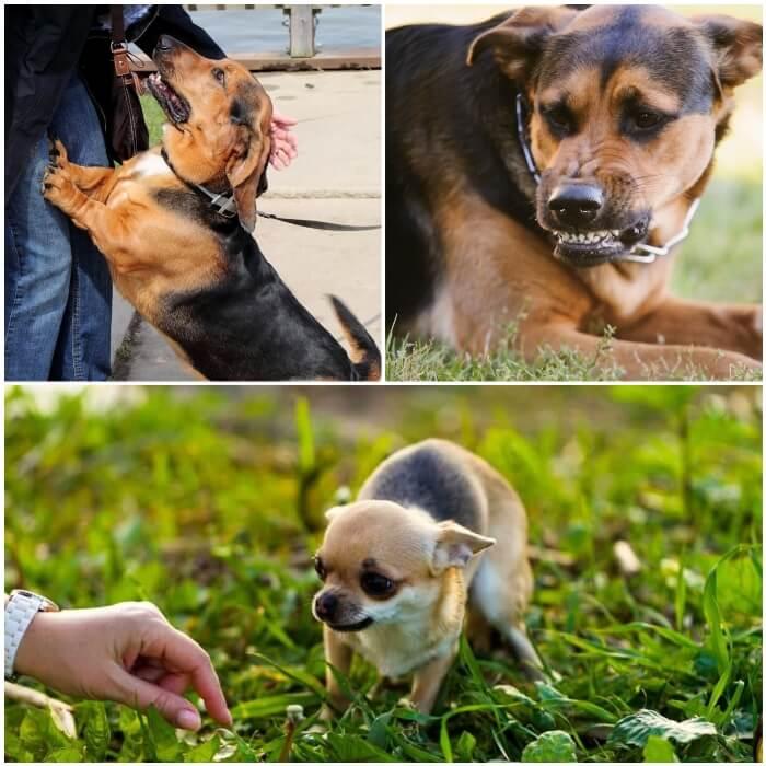 perro nervioso mostrando los dientes con agresividad