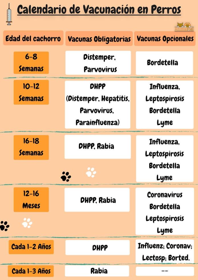 imagen diseño sobre vacunación canina