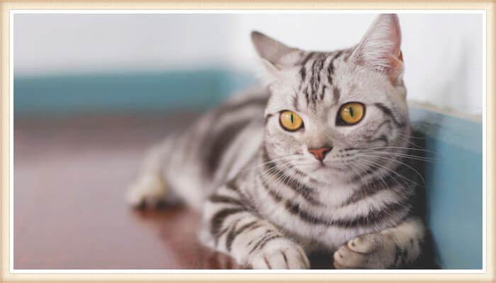 gato bonito de ojos amarillos y pelaje rayado
