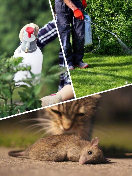 gato olfateando un ratón muerto por veneno