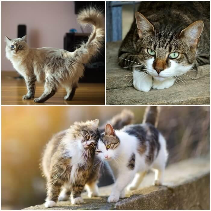 gatos frotándose mutuamente