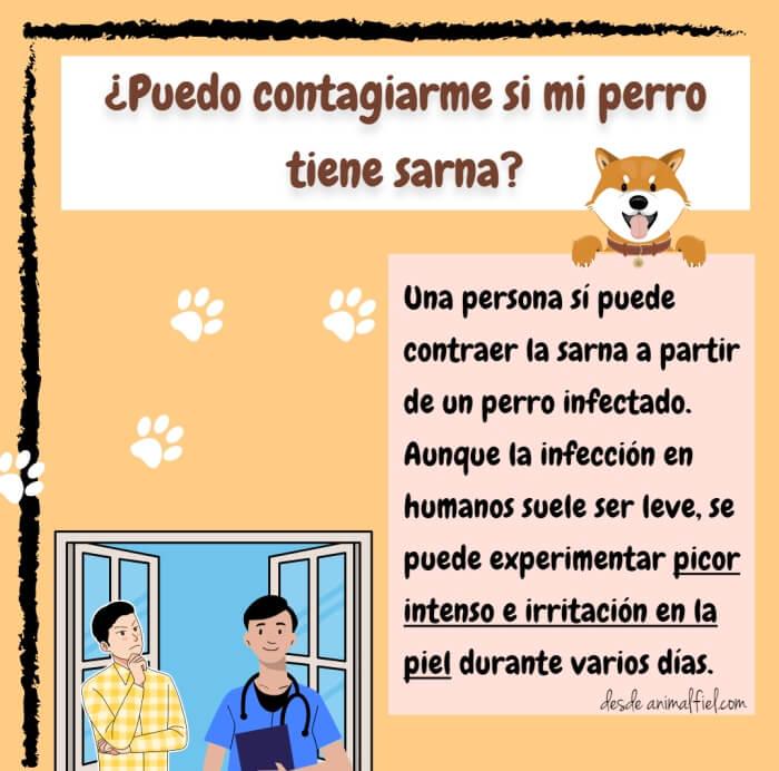 imagen-diseño contagio de sarna canina en personas