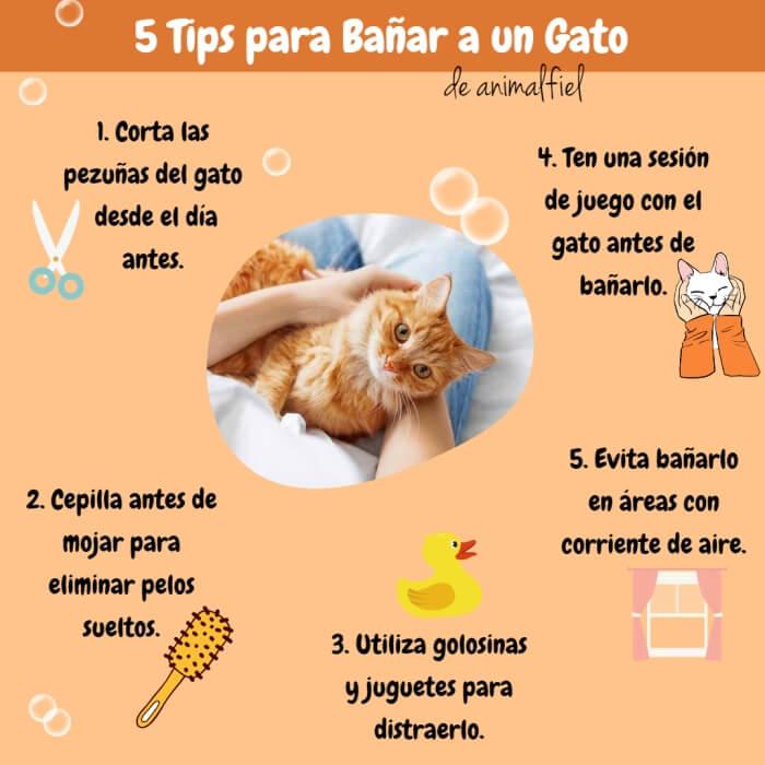 imagen diseño sobre consejos para bañar a un gato