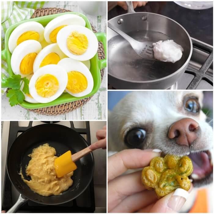 perro chihuahua comiendo golosina de huevo