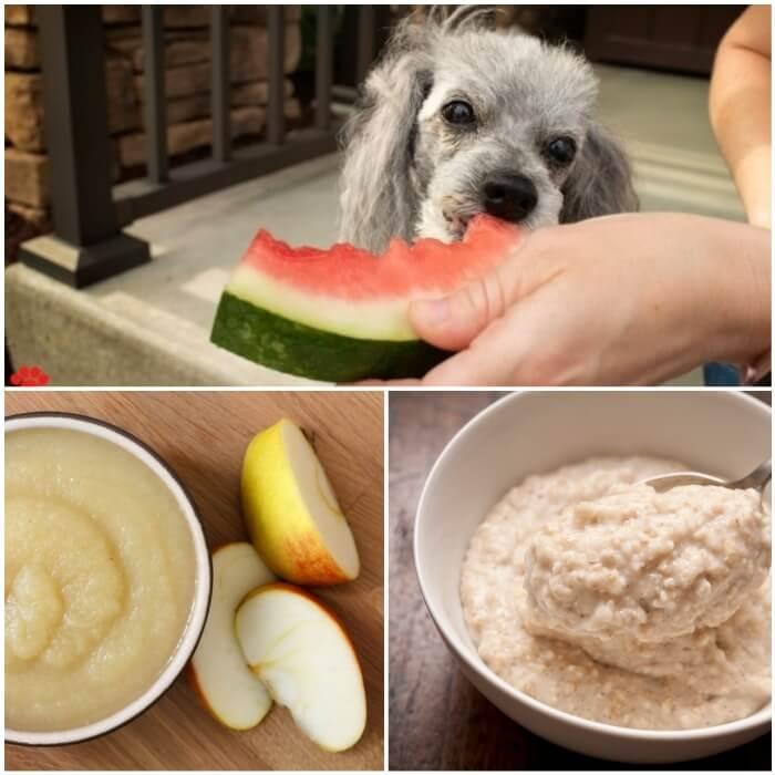 perro comiendo sandía de la mano de su dueño