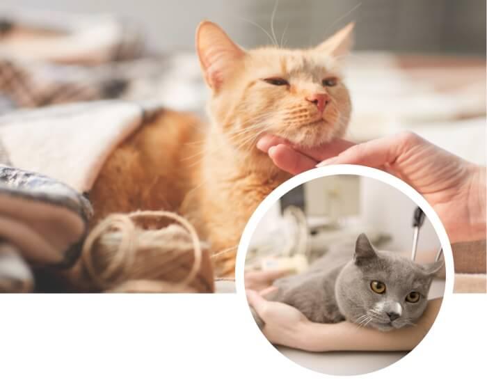 gato amarillo con síntomas de envenenamiento