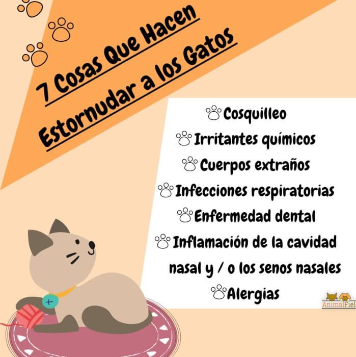 imagen diseño sobre causas del estornudo anormal en gatos