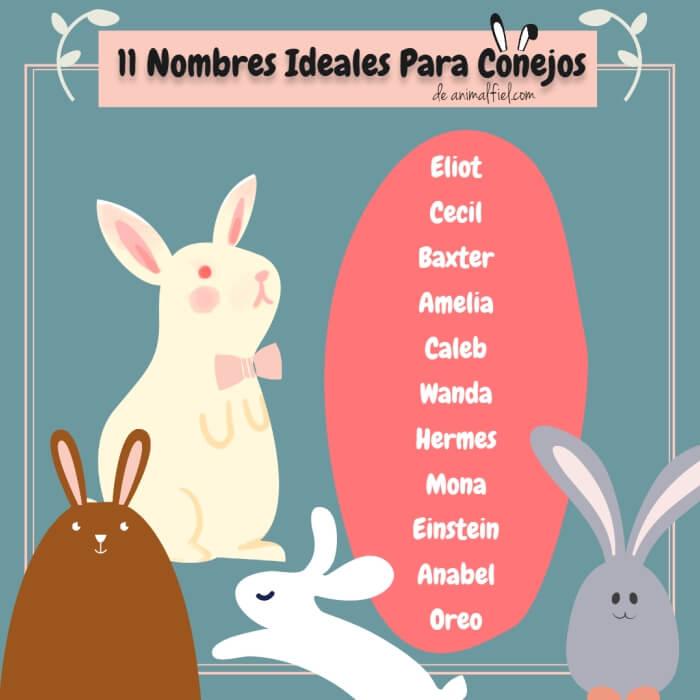 imagen diseño - lista de nombres originales para conejos