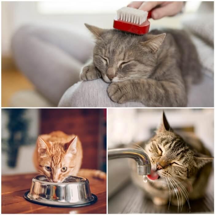 mujer eliminando los pelos sueltos de su gato