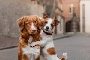 perros en la calle abrazándose