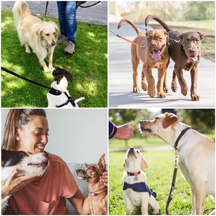 perros atados con correa paseando uno junto al otro
