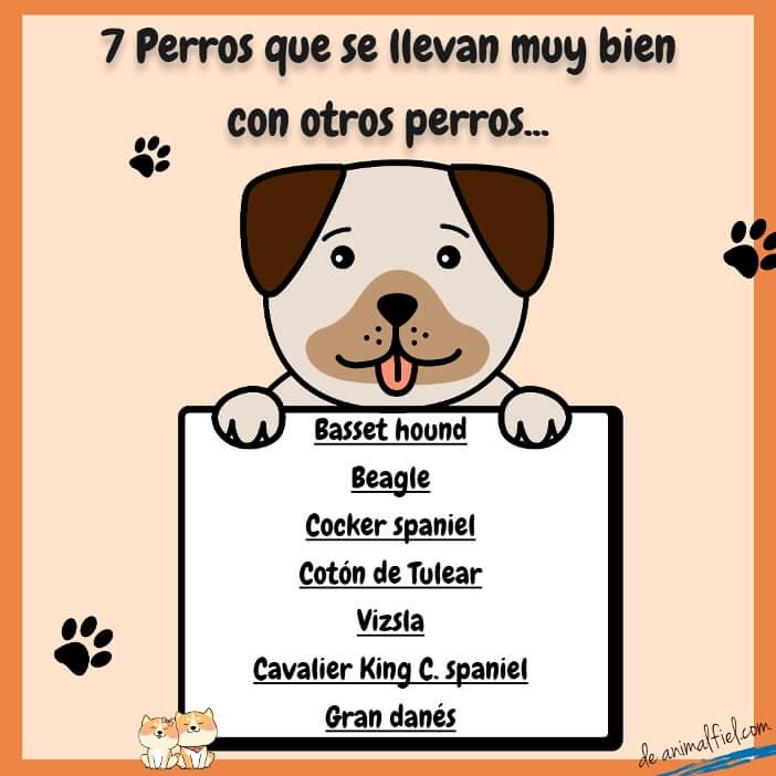 imagen diseño - razas de perros que se llevan bien con otros perros